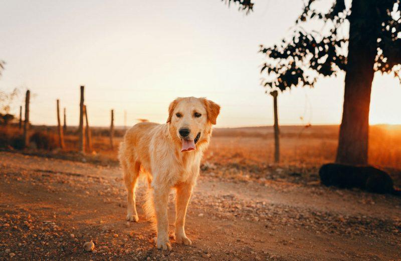 Algunos cánceres en perros pueden ser asociados al medioambiente