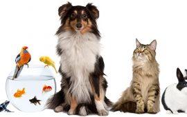 Las mascotas ayudaron a prevenir el estrés y la ansiedad durante el pasado confinamiento