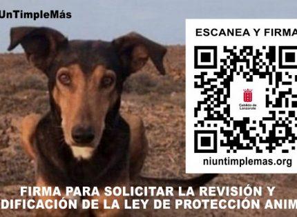 Campaña «Ni un Timple más» del Cabildo de Lanzarote
