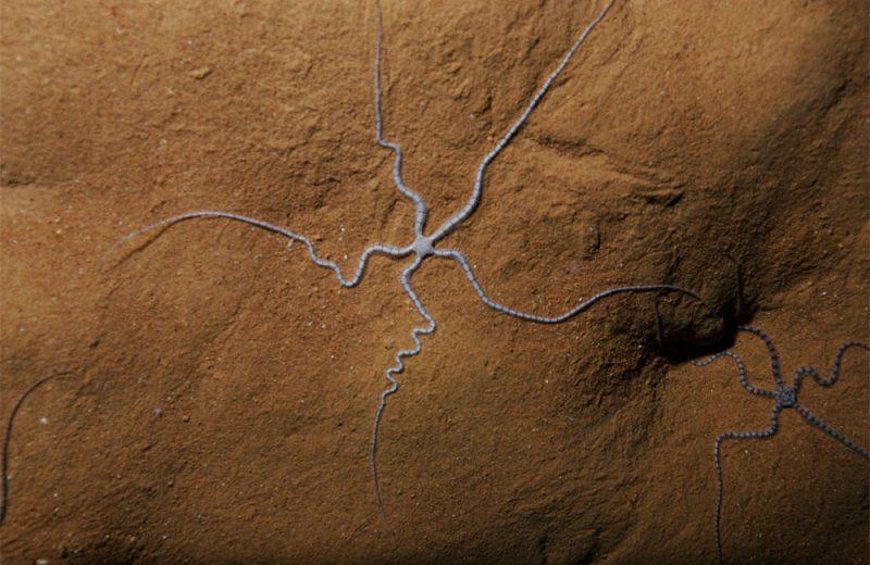 La extraña especie que vive en cuevas
