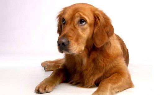 Ojitos perro