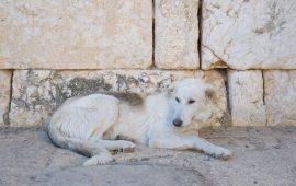 Rabia, ¿cuántos animales están realmente vacunados en España?