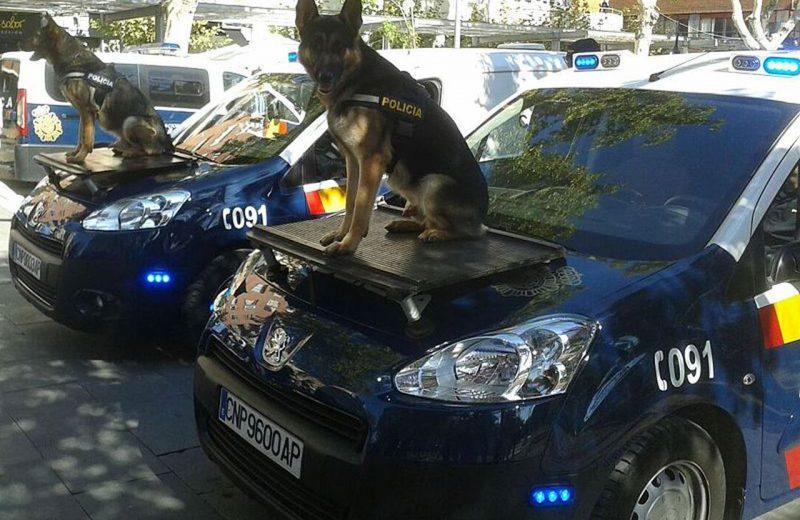 Perros policía