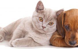 La importancia del chequeo anual en perros y gatos