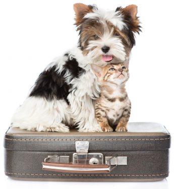 Perro y gato viajeros