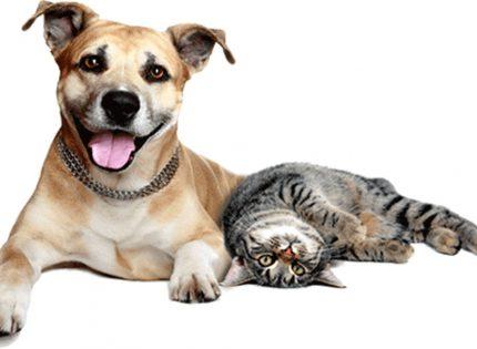 La Concejalía de Bienestar y Protección Animal reparte 420 kg. de alimentación animal para familias vulnerables