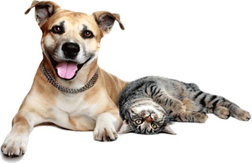Perro y gatos juntos