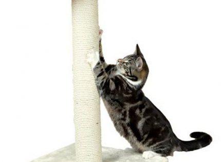 ¿Qué rascador necesitas tener para que tu gato no dañe tus muebles?