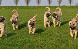 La Real Sociedad Canina insta al Gobierno a que asociaciones animales y criadores impartan la formación para tener mascotas