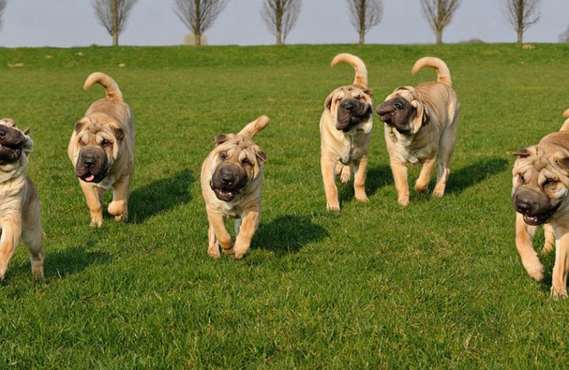 Perros mundial