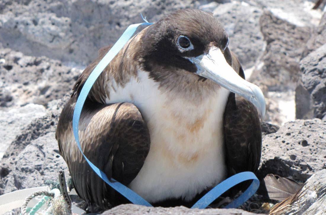 Aves y plásticos