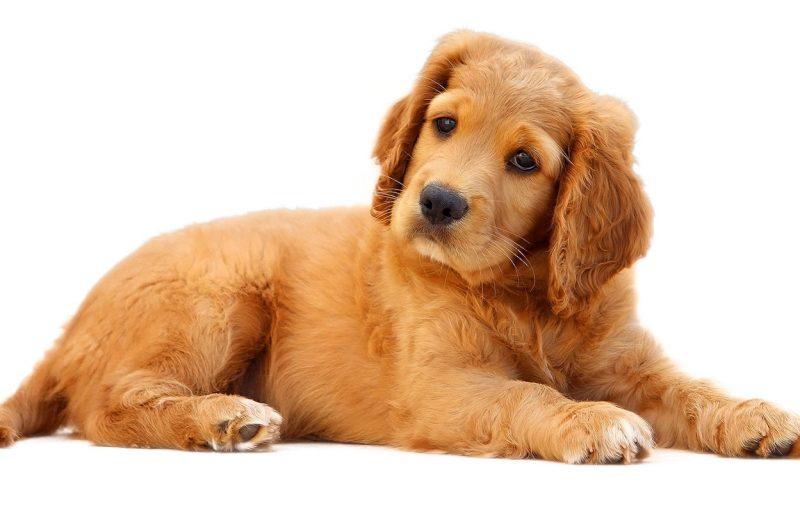 Como educar a tu perro para una buena convivencia