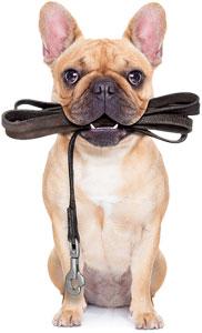 Enseñar a tu perro a no tirar de la correa