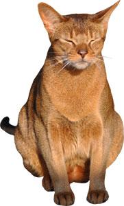 Obesidad en los gatos