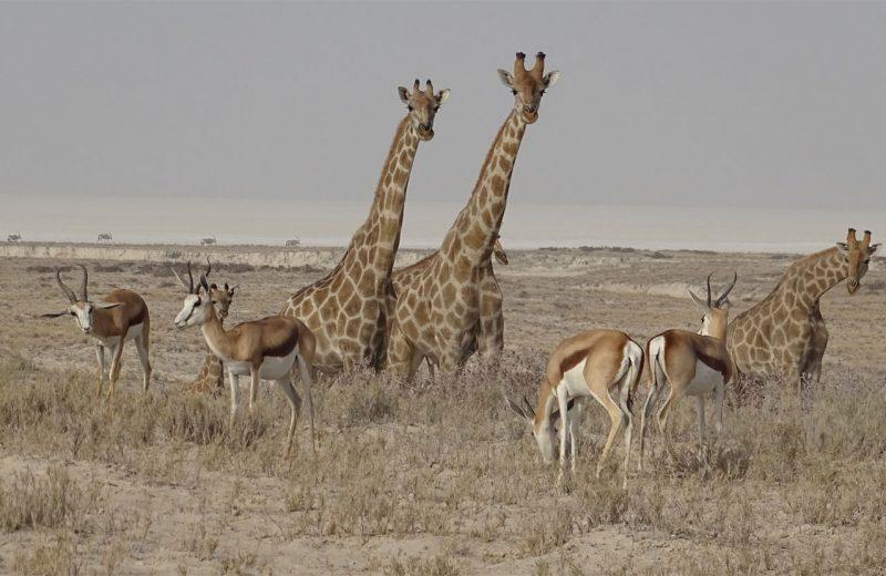 Un estudio identifica un tipo de comunicación animal basado en franjas corporales