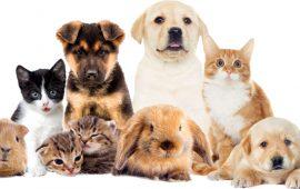¿Qué mascota te conviene más?