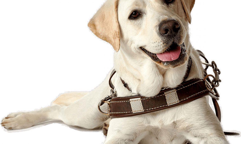 La realidad jurídica de los perros de asistencia en España