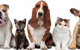 ¿Es conveniente contratar un seguro para mascotas?