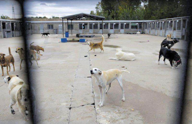 Delito de maltrato animal y pluralidad de animales víctimas