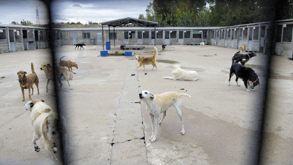Protectora Animales Mauri