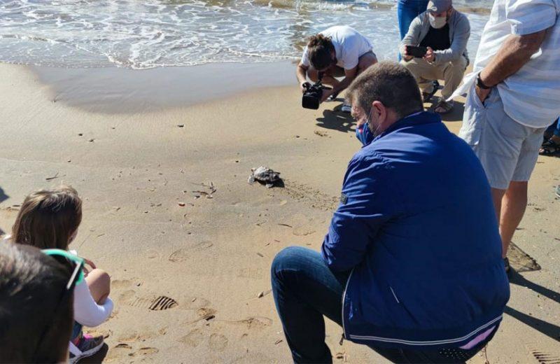 Liberan los 11 ejemplares restantes de tortuga boba nacidos en el verano de 2019 en Calblanque