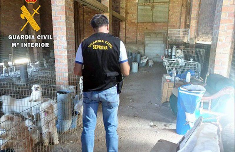 Detenido un individuo por un criadero clandestino de perros a los que cortaba las cuerdas vocales para que no ladraran