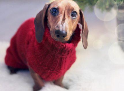 Se avecina el invierno… ¿Cómo afectará a mi perro?