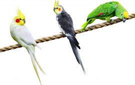 Cuidados de las aves en el otoño e invierno