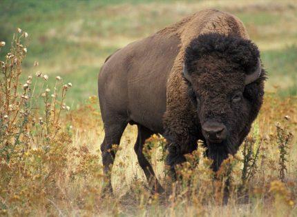La crisis climática aumenta el riesgo de infecciones en la fauna salvaje