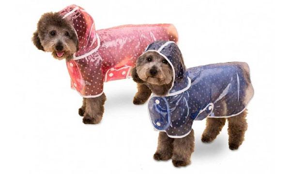 Chubasqueros perros