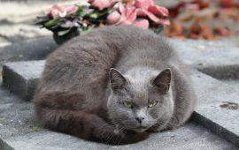 El Ayuntamiento de San Fernando pone en marcha una nueva campaña de esterilización de gatos callejeros