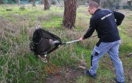 En 2020 el Equipo de Rescate de GREFA cumple quince años y supera los 65.000 animales atendidos
