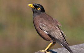 Estas son las especies invasoras que Europa necesita erradicar con más urgencia