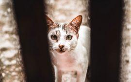 El senador Mulet, de APDDA, solicita un nuevo concurso para reubicar a los gatos del Aeropuerto de Barajas