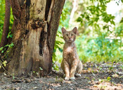 El Gobierno canario ignora a las entidades animalistas y quiere ejecutar a los gatos y hurones de las islas