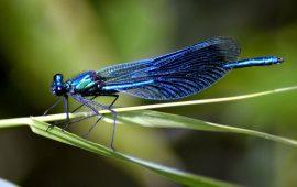 El desconocimiento de las especies de insectos y su estado de conservación es casi total