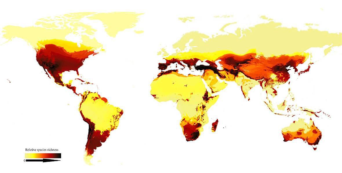 Mapa abejas