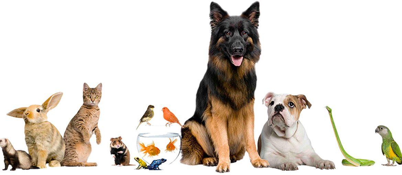 Milanuncios, ahora quiere hacer las cosas bien con los anuncios de mascotas