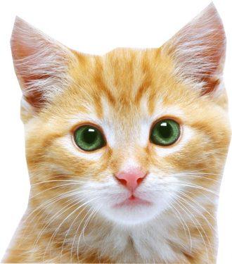 Ojos en los gatos