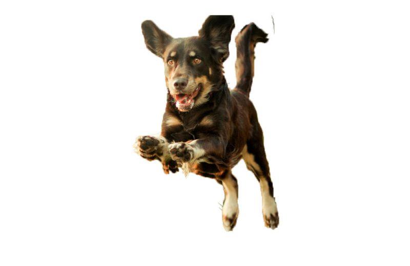 Localizador para perros, un elemento muy útil