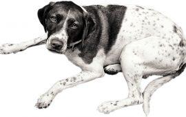 Osteoartritis canina, una enfermedad muy dolorosa