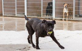 La Diputación de Zaragoza busca familias para perros que llevan más de cinco años en el Centro de Protección Animal