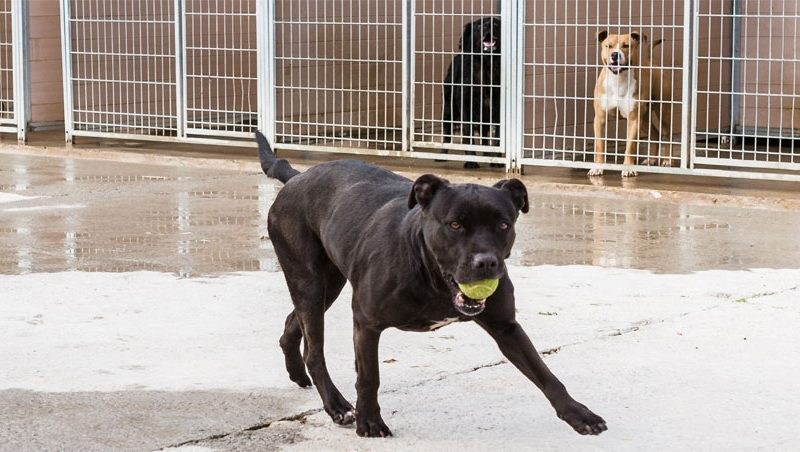 Perro para adoptar