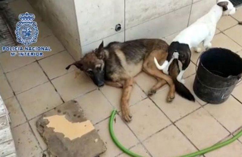 Policías solicitan cambios en la Ley de Enjuciamiento Criminal para mejorar la investigación de los delitos contra los animales
