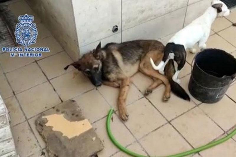 Perro rescatado policía