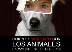 Violencia contra la Mujer y sus mascotas