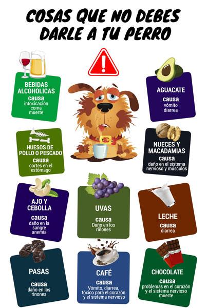Infografía alimentos no permitidos perros