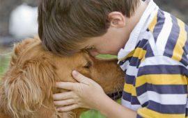 21% de los españoles se plantea regalar un animal de compañía