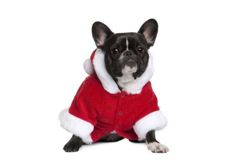 La mitad de los perros que se regalan en Navidad terminan siendo abandonados, según la Real Sociedad Canina