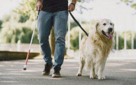 España, primer país del mundo en incluir el braille en medicamentos veterinarios